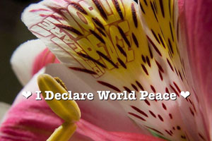 IDWP Peace Flower